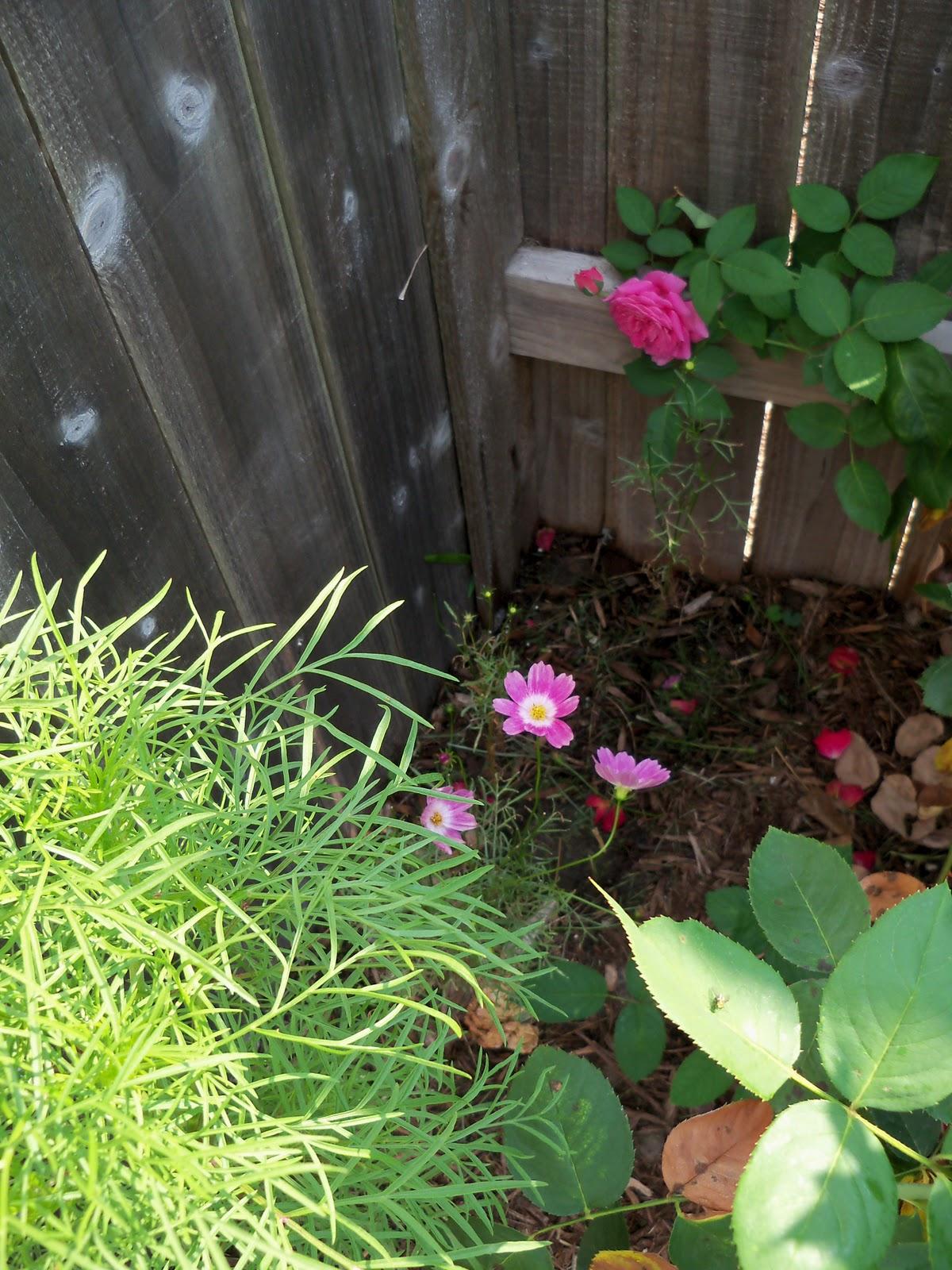 Gardening 2010, Part Two - 101_3391.JPG