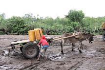 K odvozu vody se často využívá také speciální povoz tažený osly. (Foto: Monika Ticháčková)