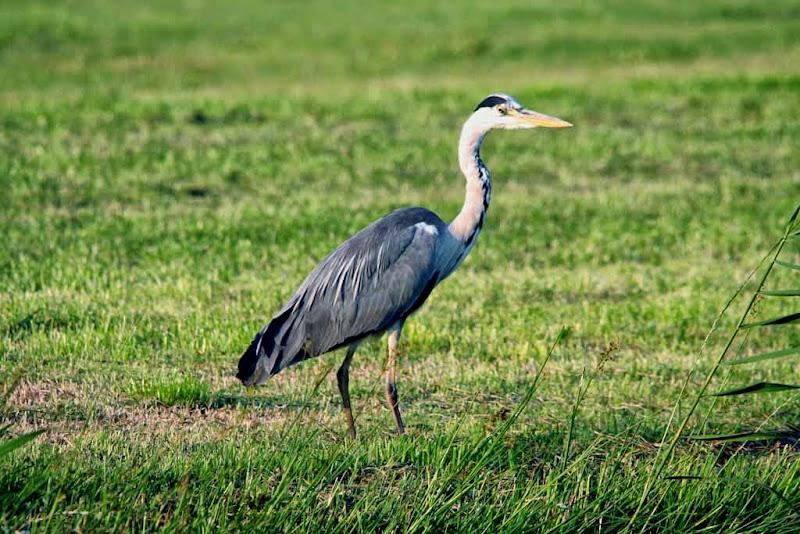 Vogels en dieren - IMG_9150.JPG
