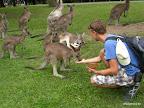 Fabi und die Kängurus