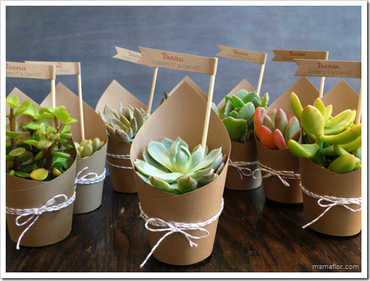 Suculentas en PAPEL CARTON BIODEGRADABLE