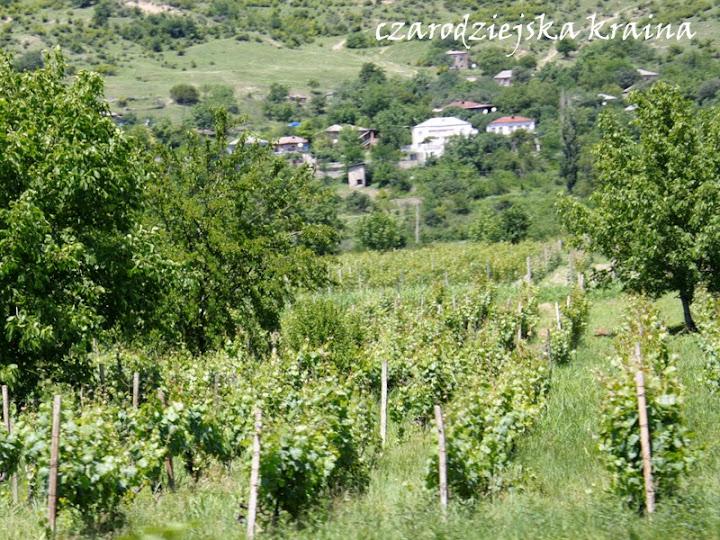 Winnice - Kachetia - Gruzja