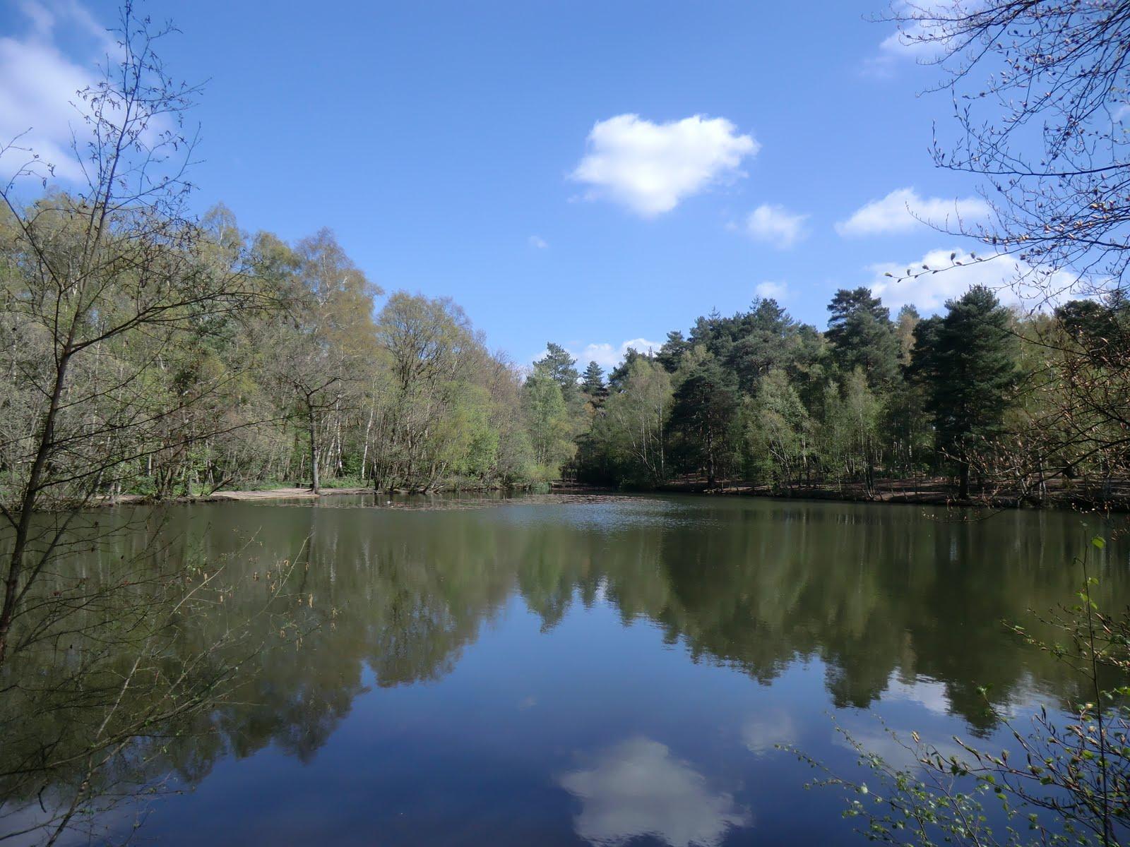 CIMG0448 Heath Pond in spring