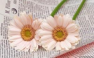 imagini-cu-flori2.jpg