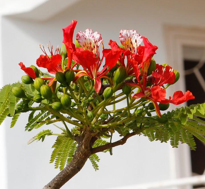 Mon jardin senegalais _MG_4824