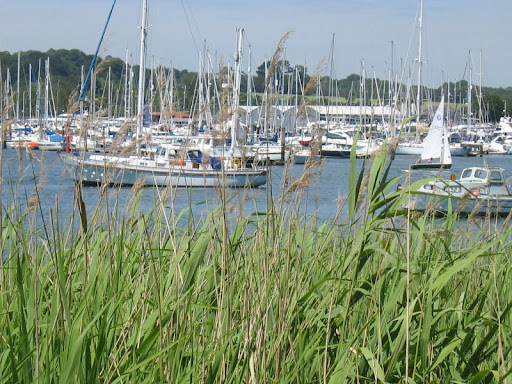 rushes and yachts