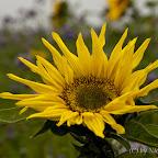 20111023_104712__MG_5768_EOS_1000D.jpg