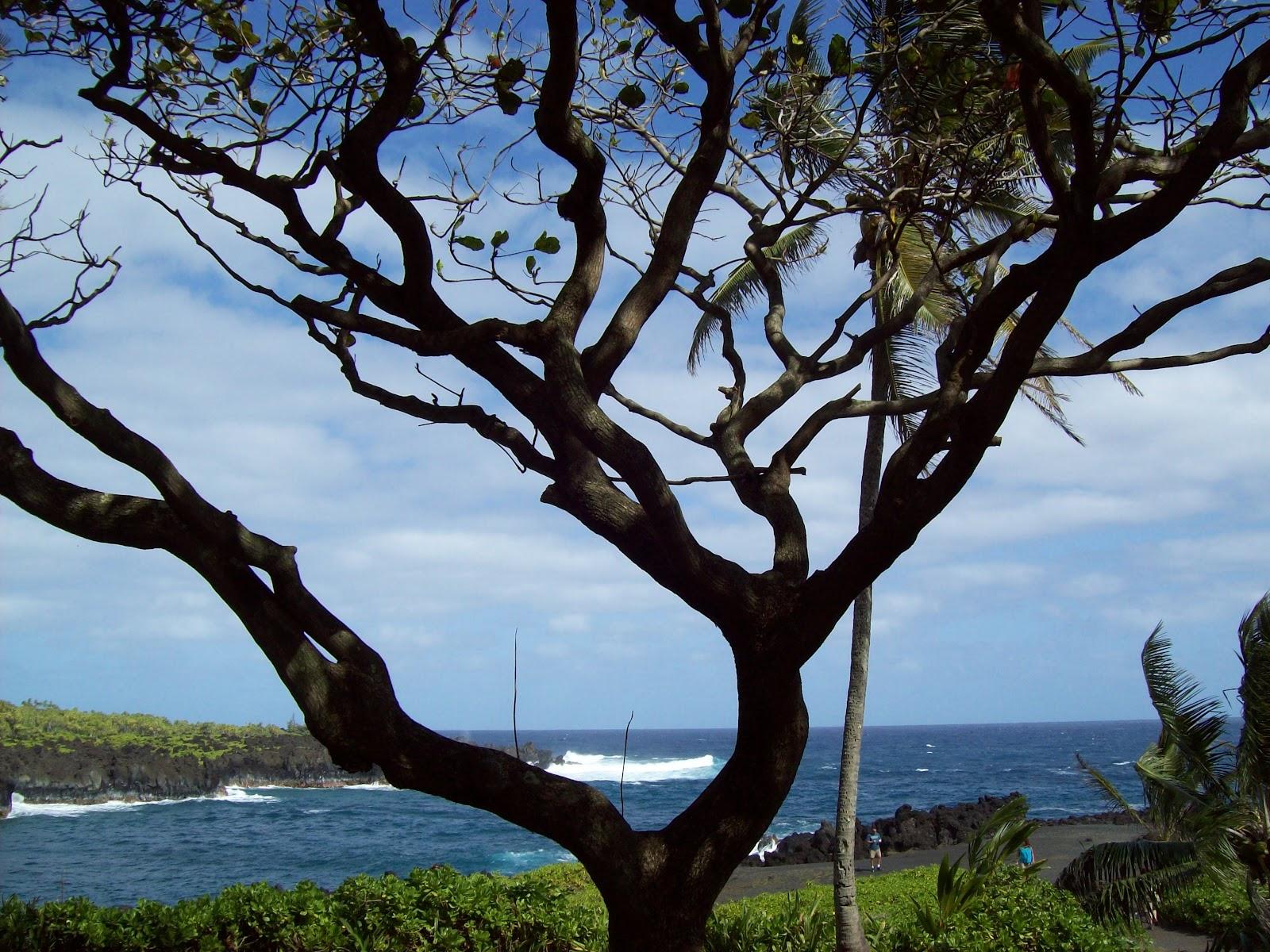 Hawaii Day 5 - 100_7480.JPG