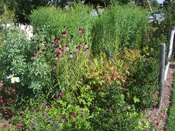 2010.08.13-037 jardin d'Amérique du Nord