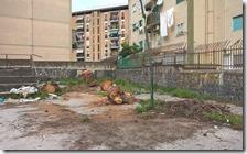 Resti dell'albero abbattuto
