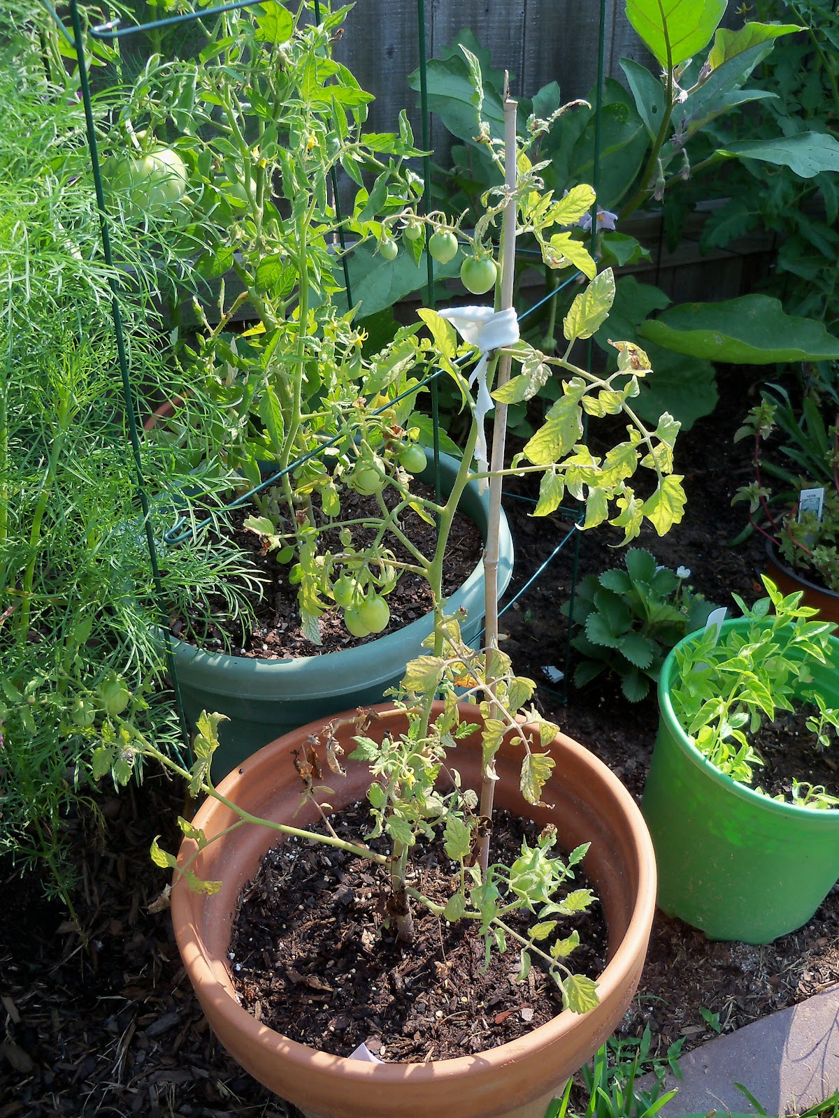 Gardening 2010, Part Two - 101_3082.JPG