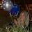 Nur Ainun's profile photo