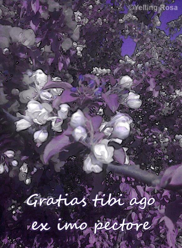 Gratias tibi © Yelling Rosa 2017