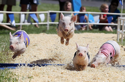 Flying pigs. (Photo Credit: Justin Sullivan/Getty Images)