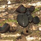 Black Jelly Drops
