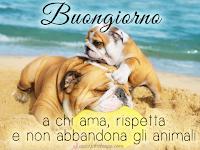 buongiorno ama rispetta gli animali no all'abbandono immagine.png