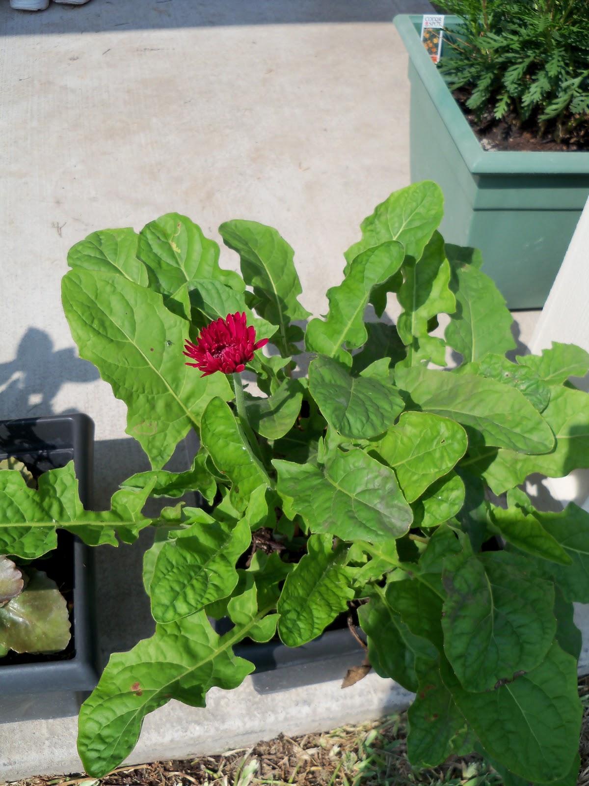 Gardening 2010, Part Two - 101_3464.JPG