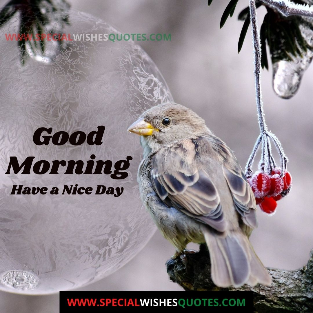good morning images have a nice day