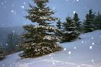 A wonderfully wintry December 17.