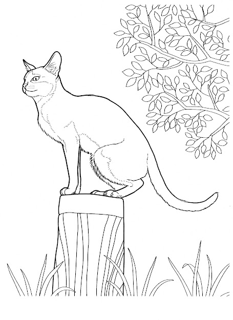 Cat Cats Coloring Pages For Teens And Adults