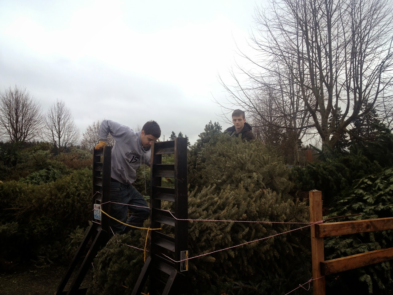 Christmas Tree Pickup 2014 - IMG_3172.jpg