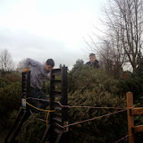 Christmas Tree Pickup 2014 - IMG_3172.jpg
