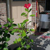 Gardening 2010, Part Three - 101_4939.JPG