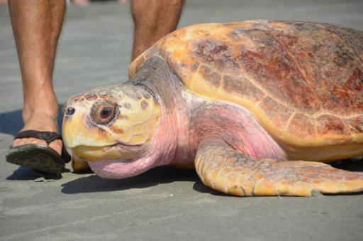Photo from the Charleston Aquarium