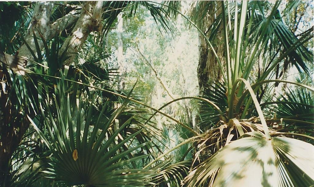 1290Mataranka Springs