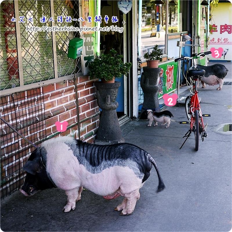 41 好多豬豬