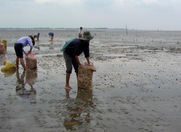 Nuôi thủy sản ứng phó với hạn hán, xâm nhập mặn - 56e11e4ad760a