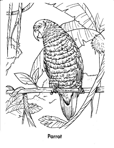 Free Coloring Pages Of Equatorial Forest Animals