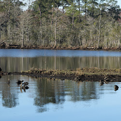 Fowl Marsh from Boat Feb3 2013 060