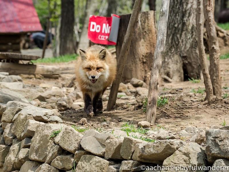 foxvil (25 - 70).jpg