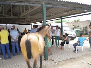 caballo cantaor