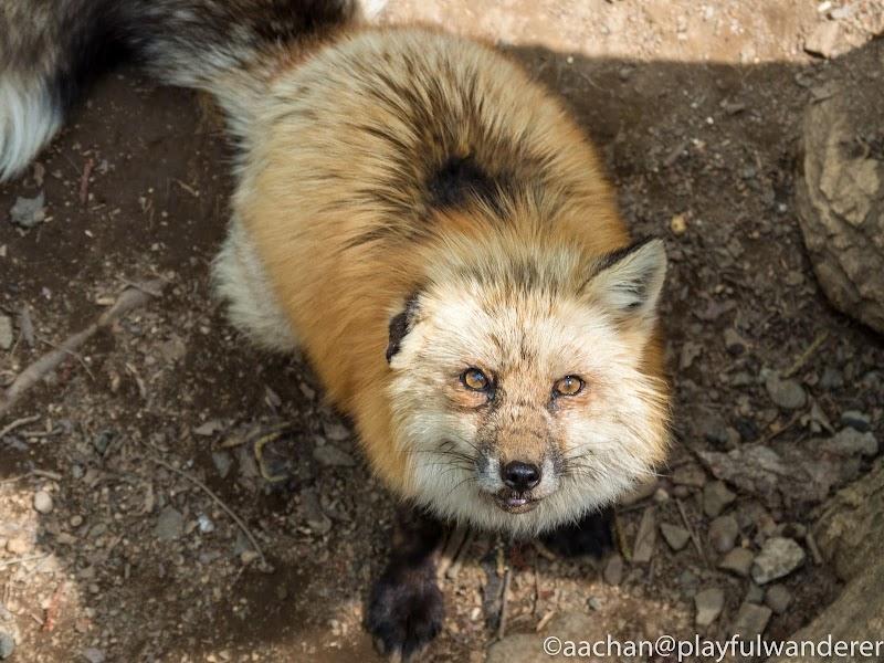 foxvil (43 - 70).jpg