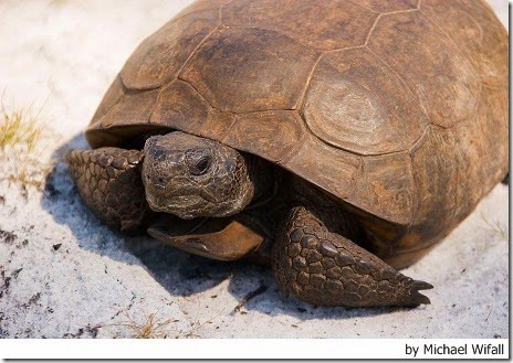 parassiti intestinali nelle tartarughe