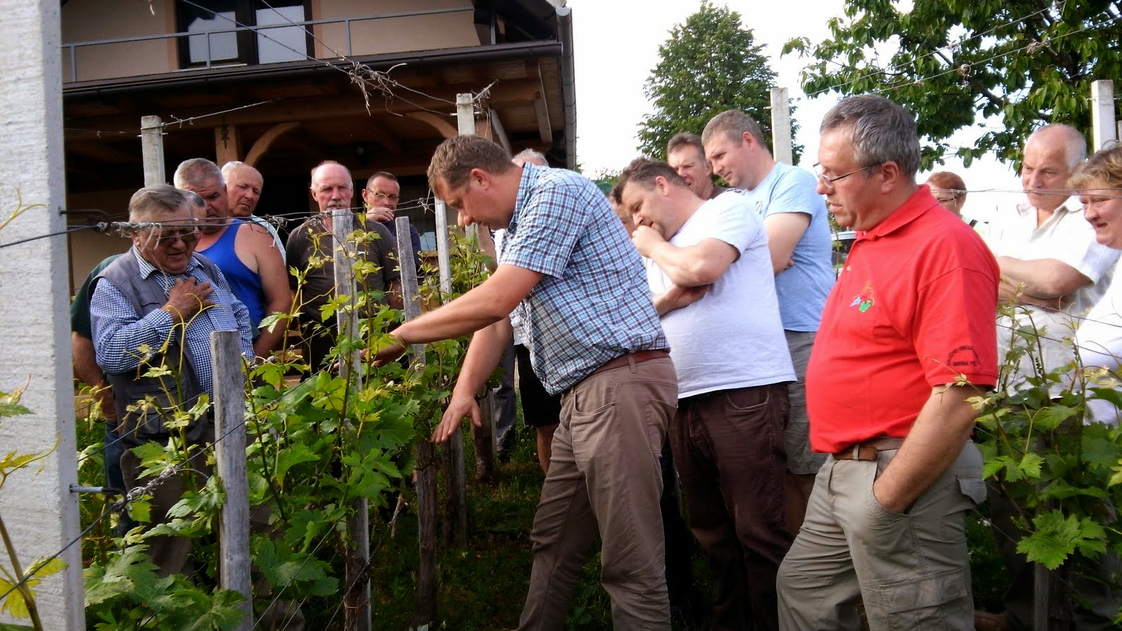 Strokovno predavanje v vinogradu 13.5.2015