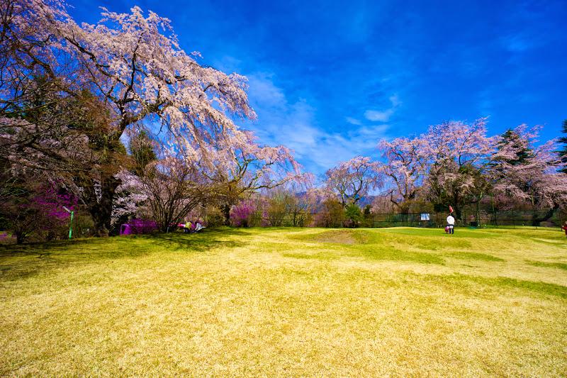 富士ビューホテル 桜 写真8
