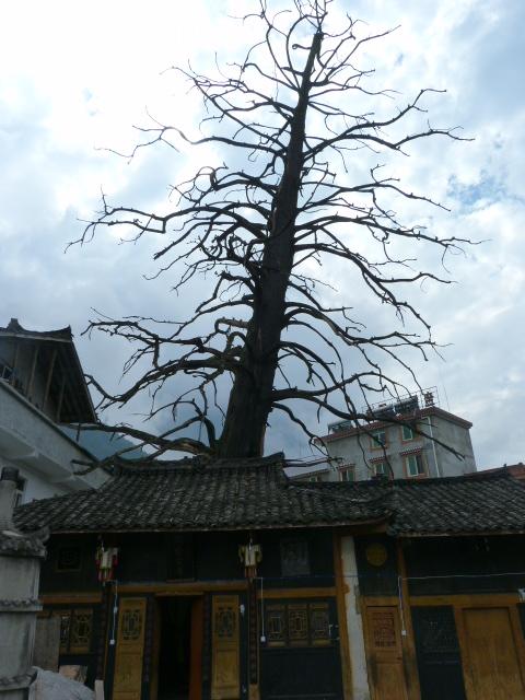 temple.l arbre mort est DANS le temple