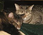 Bob & Ivy sleeping
