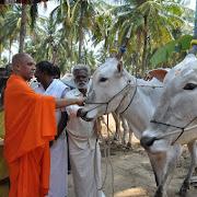 Cattle Fair Inauguration 19-03-2016