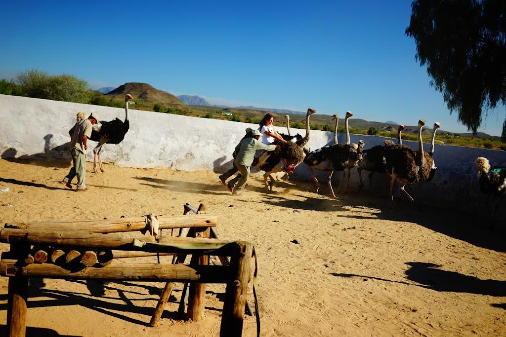 high gate ostrich farm