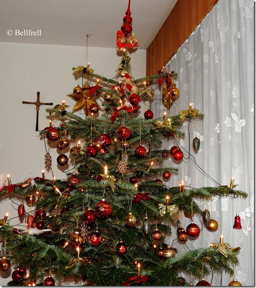 9. Jänner Baumblitz (2)