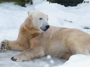 Photo: Ein gluecklicher Knut im Schnee :-)