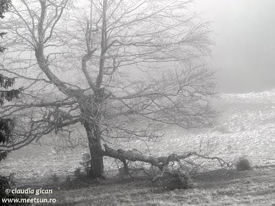 tristetea celui ce ramane - copacul gol, copac cazut