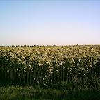 2012 15 August 009.jpg