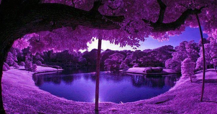 Most Beautiful Photos Purple Scenery At Japanese Garden
