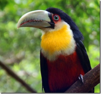 O que vimos e o que fizemos em Foz do Iguaçu - PR 23