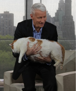 Anderson Cooper Meets 'Meow' The Overweight Cat 1